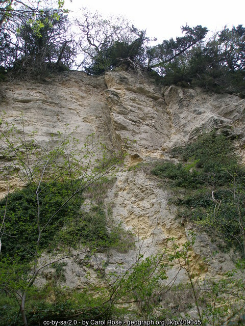 This photo of some cliffs in Castle Eden Dene is copyright Carol Rose